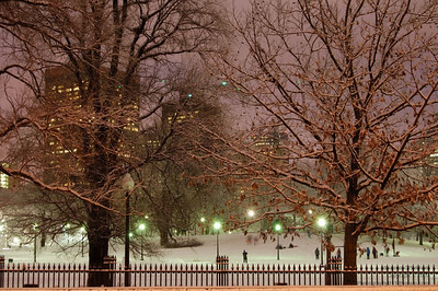 The Public Gardens, Boston