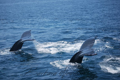 Whales Tails, ,,,,