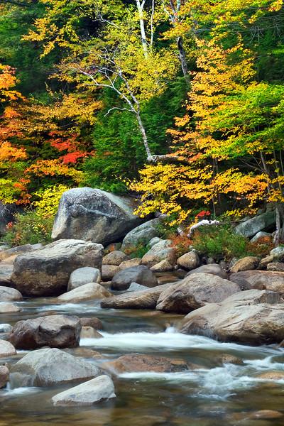 Swift River Fall Color