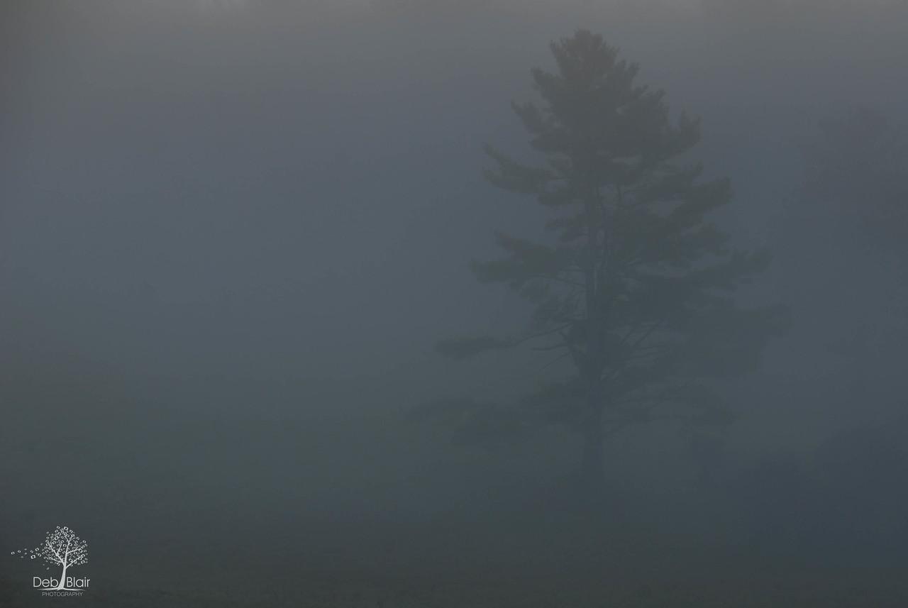 foggy tree in Peterborough, NH