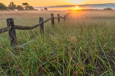 Morning Mist on the Dune Grass