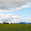 Green pastures at Sawyer Farm/Mt. Monadnock, Jaffrey, NH 2013