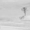 Lone Tree in winter field, Rollingsford, NH