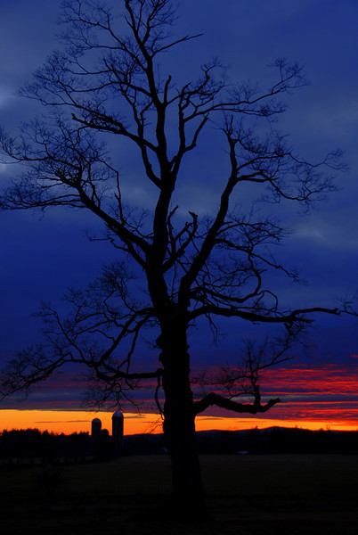 Blue Hour Sunset Tree