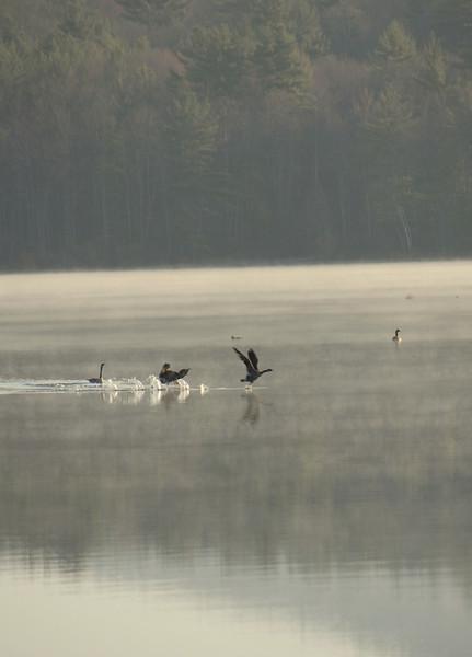 Mad Goose - Powdermill Pond, Hancock, NH