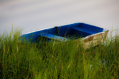 Boat In Green Weeds 4261