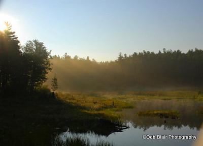 Foggy Swamp Scene in Peterborough, NH