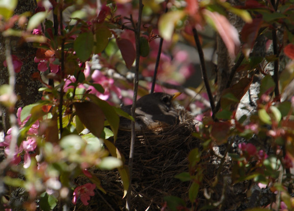 snug in the nest