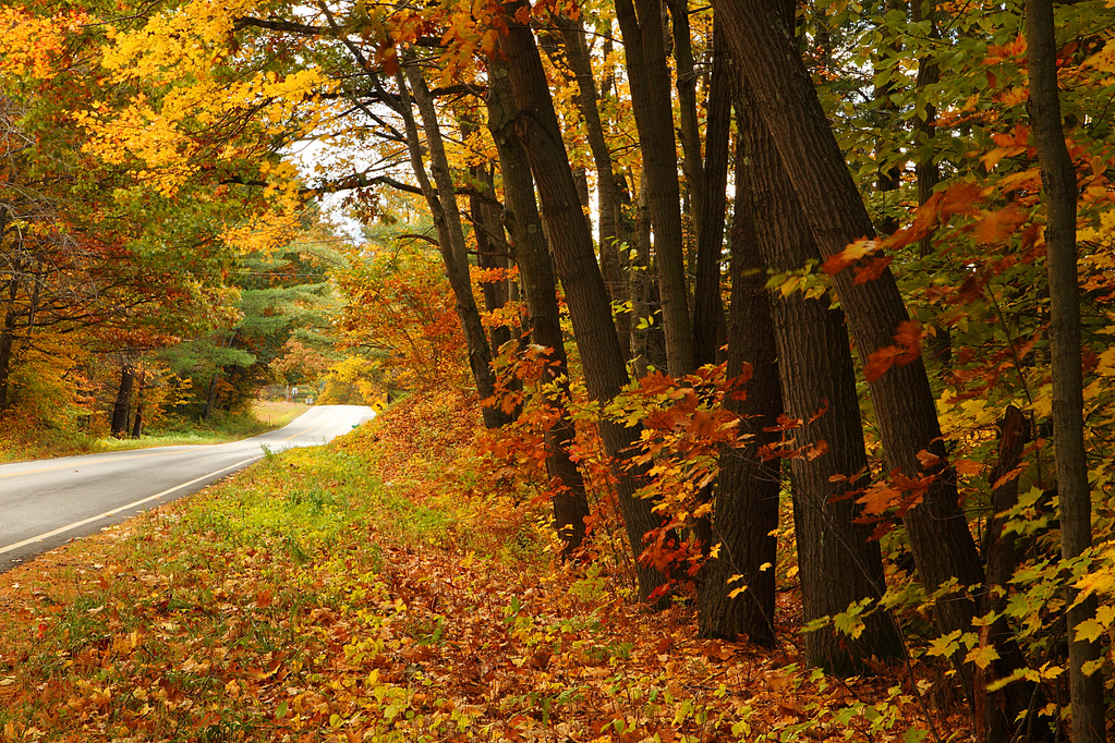 Fall Colors, Morning White River Junction Vermont
