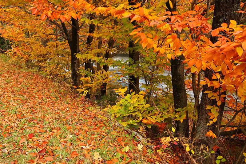 Falls Colors along the River New Hampshire