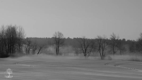 River Smoke through trees