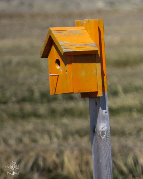 Bird House in the Meadow in Seabrook, NH