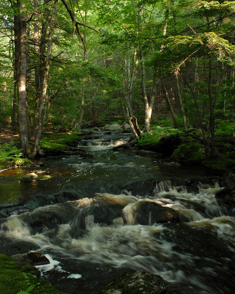 Stream in the Wales Preserve, Sharon2