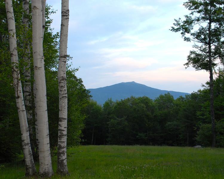 Birch Tree view Mount Monadnock