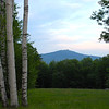 Birch Tree view Mount Monadnock