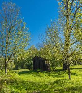 Greening Up - Vermont