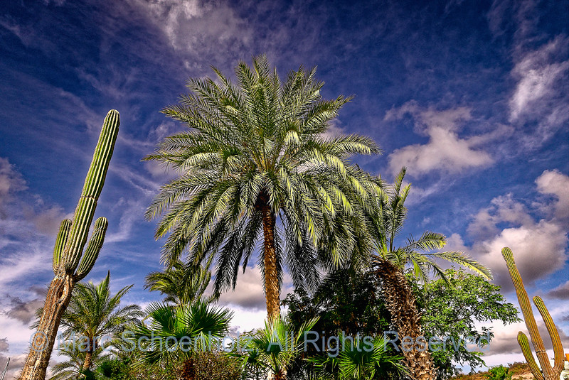 Palm tree, Cactus and Clouds
