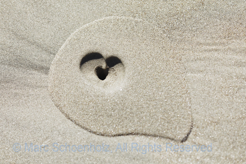 Sand Design;  Photographed at:  Sea Lion ,  Bahia Magdalena, United States,  February,  2018    © 2018 Marc Schoenholz  Camera:  Canon Canon EOS 5D Mark IV Lens:  153 Shutter Speed:  1/6400;  Aperture:  5 ISO Setting:  400