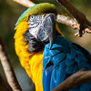 Fradella Photography Fine Art - Natures Creatures