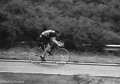 New Forest 25 1982 https://ko-fi.com/philocphotos