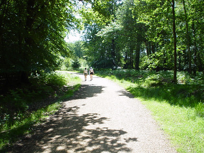 Road Through Forest  Claire and Fiona walking ahead through the forest.