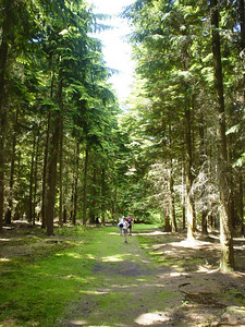 An Avenue  The troop wandering through the forest