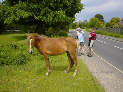 Another Horse  These guys are everywhere.