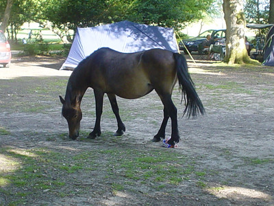 Thief Has Finished  If it wasn't bad enough stealing the bread, the horse then proceeded to munch it ALL right in front of us, and then walk away leaving the bag.  What a cheek.