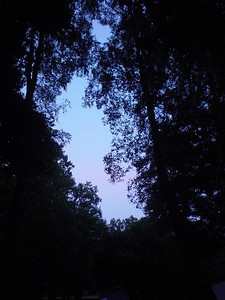 Night Sky  The night sky visible through all the trees.