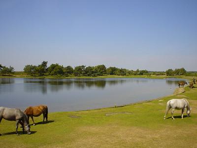 Hatchet Pond (3)