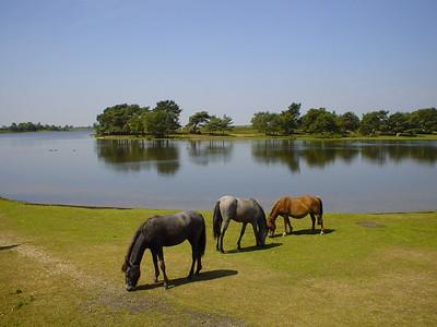 Hatchet Pond (2)