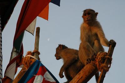 monkey sunrise / Mysore