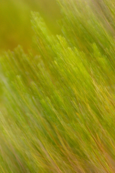 Grass Abstract, San Elijo Estuary