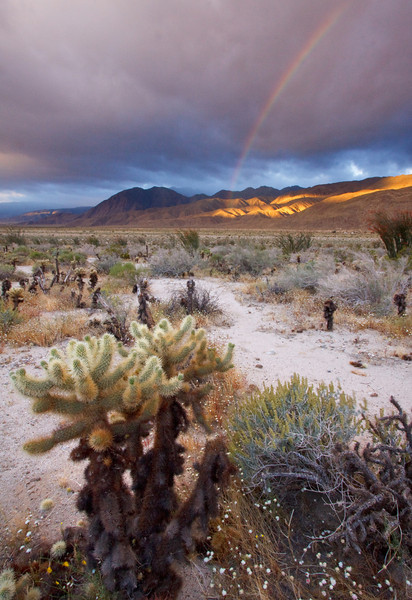 Cholla and Rainbow
