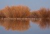 Roosting Reflection