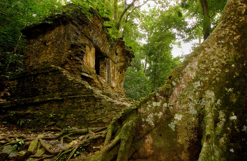 Tree and Ruins, Palenque