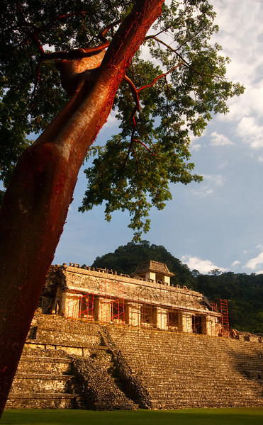 Temple and Tree, Palenque