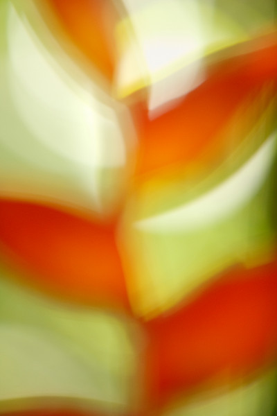 Plant Abstract, Palenque