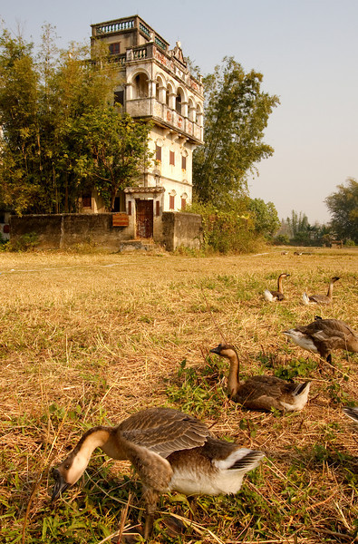 Geese And Diaolou, Kaiping