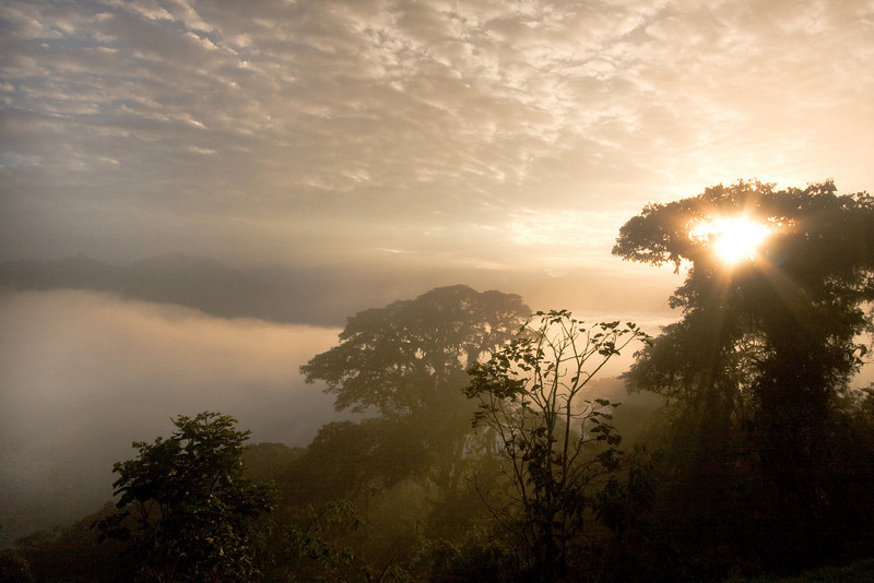 Cloud Forest Sunrise