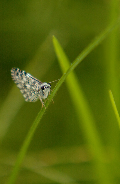 Moth in the Grass