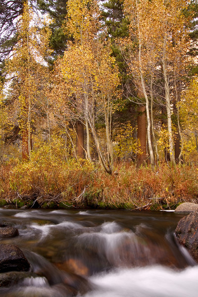Trees and Cascades, Bishop Creek
