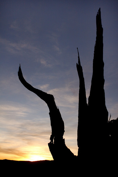 Sunset Silhouette, Ancient Bristlecone Forest