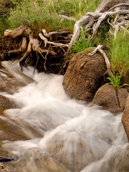 Flowing Creek and Roots