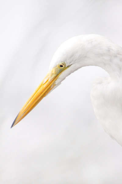 Egret High Key