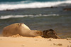Monk Seal Bonding