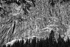 Sentinel Bridge, Yosemite