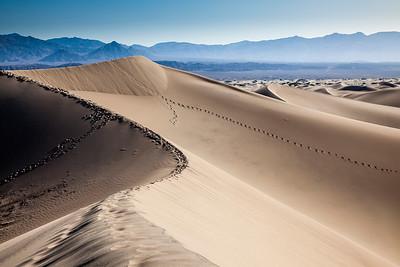 Dune #6