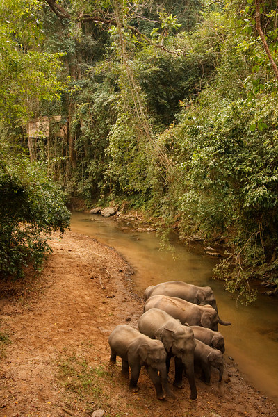 Elephants Huddled, Xishuangbanna