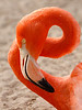 Flamingo Loop